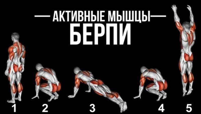 На какие мышцы влияет бёрпи?
